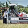 Panen Raya, Pemerintah Terus Lakukan Gerakan Serap Gabah Petani